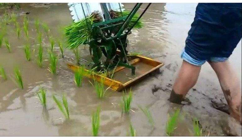 máy cấy lúa nông nghiệp mini 2 hàng