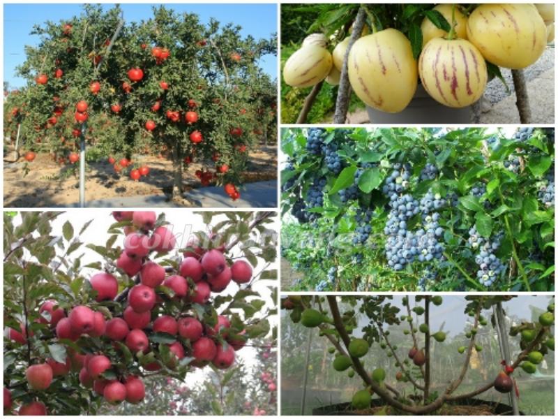 Đảm bảo chất lượng trái cây